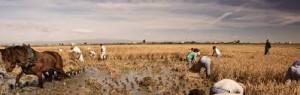 Ebrodelta und Reis